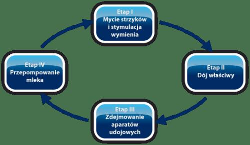 4 fazy dojenia